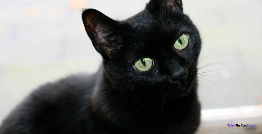 Black Cat Names in Movies