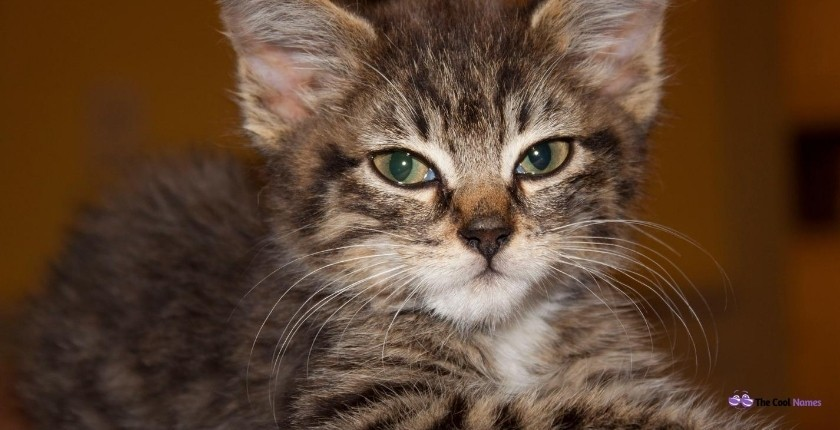Cutest Tabby Cat Names