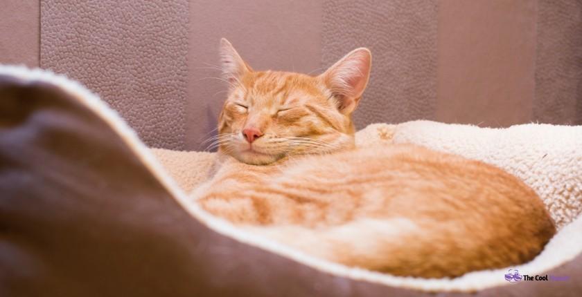 Male Orange Cat Names