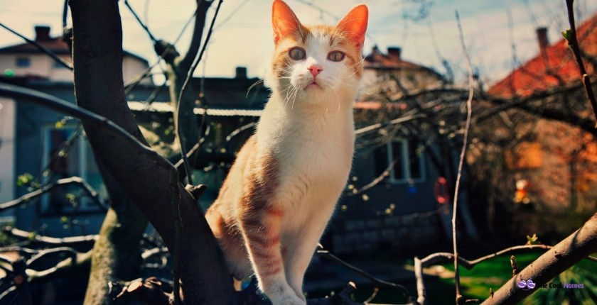 Orange Cat Names from Movies