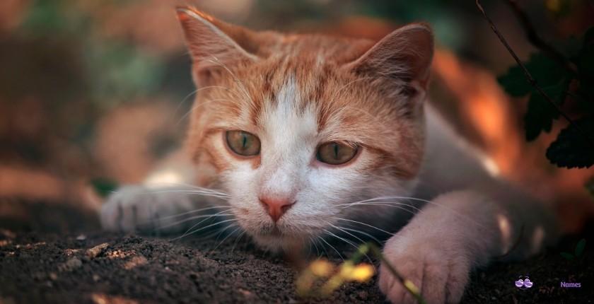 Outstanding Orange Cat Names