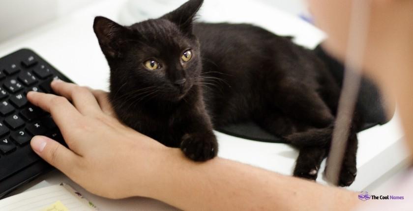 Unique Black Cat Names
