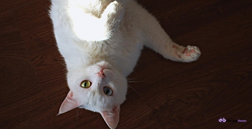 White Cat Names Male