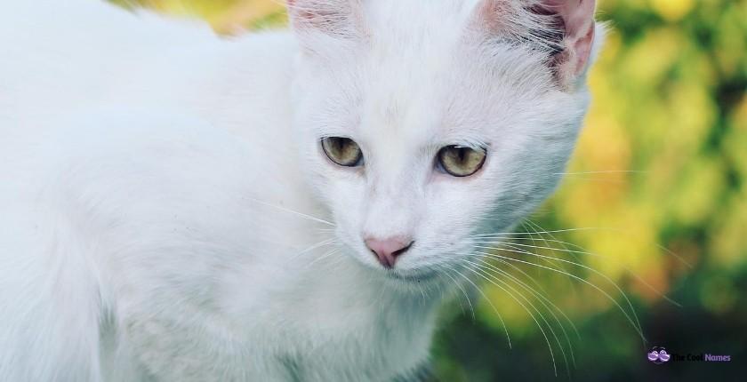White Cat Names Unisex