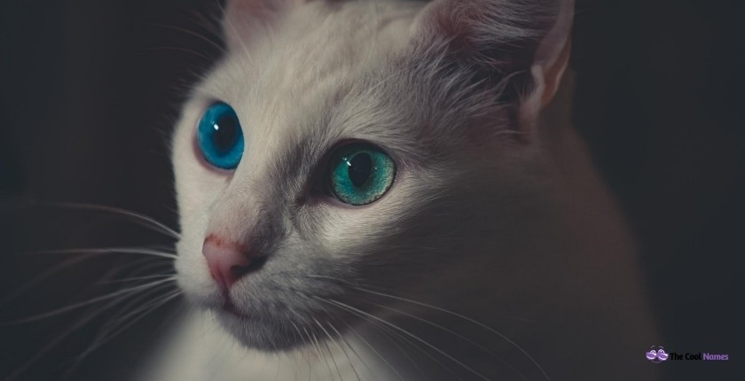 White Cat Names with Blue eyes