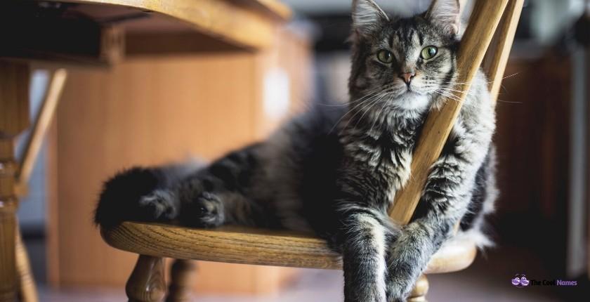 unique gray cat names