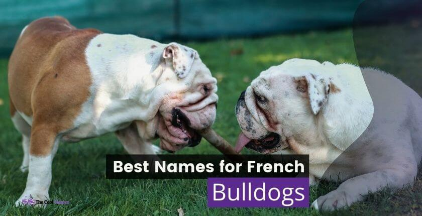 Names for French Bulldogs