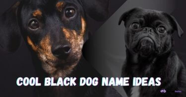 Cool Black Dog Names