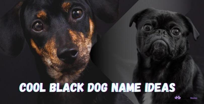 Cool Black Dog Names