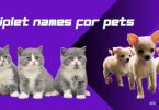 Triplet Names for Pets