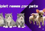 Triplet Names for Pets